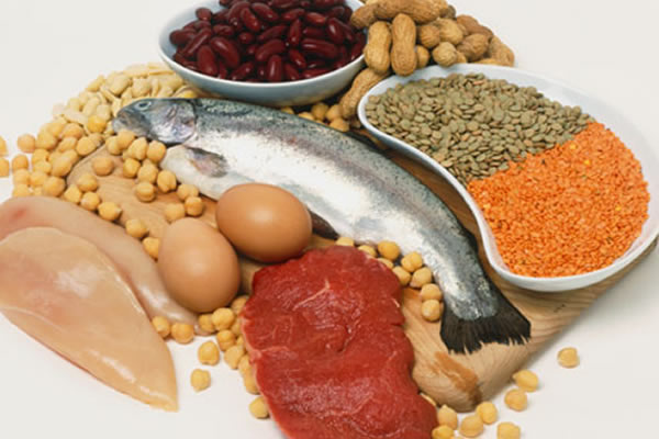 Top 7 Protein Sources You Can Take Benefit From
